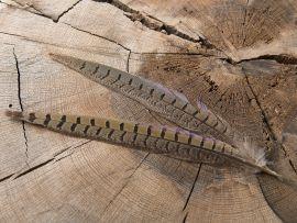 Wildfasanfeder 25-30 cm