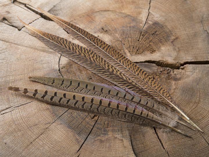 Wildfasanfeder 25-30 cm 2
